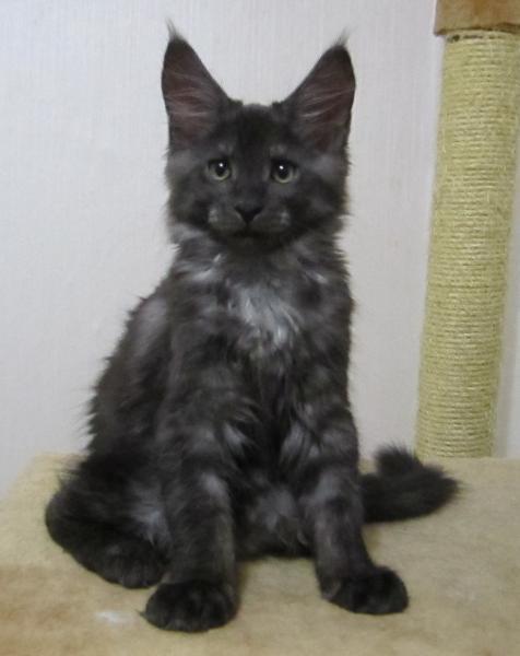 Тема черный кот